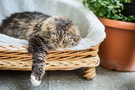 best litter box for large cats