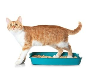 how to keep a litter box clean with unfragranced litter