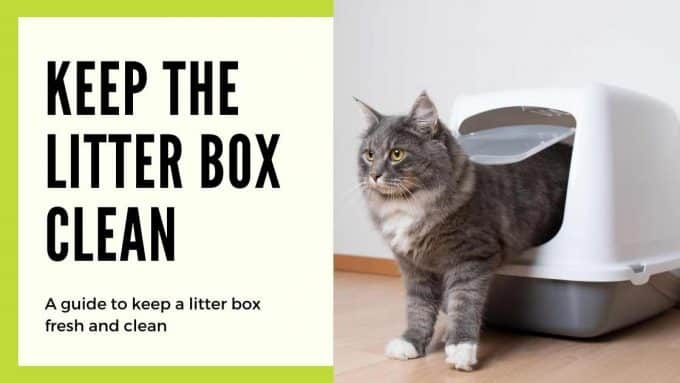 cat getting getting out of a litter box