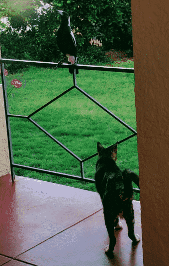 cat with a magpie