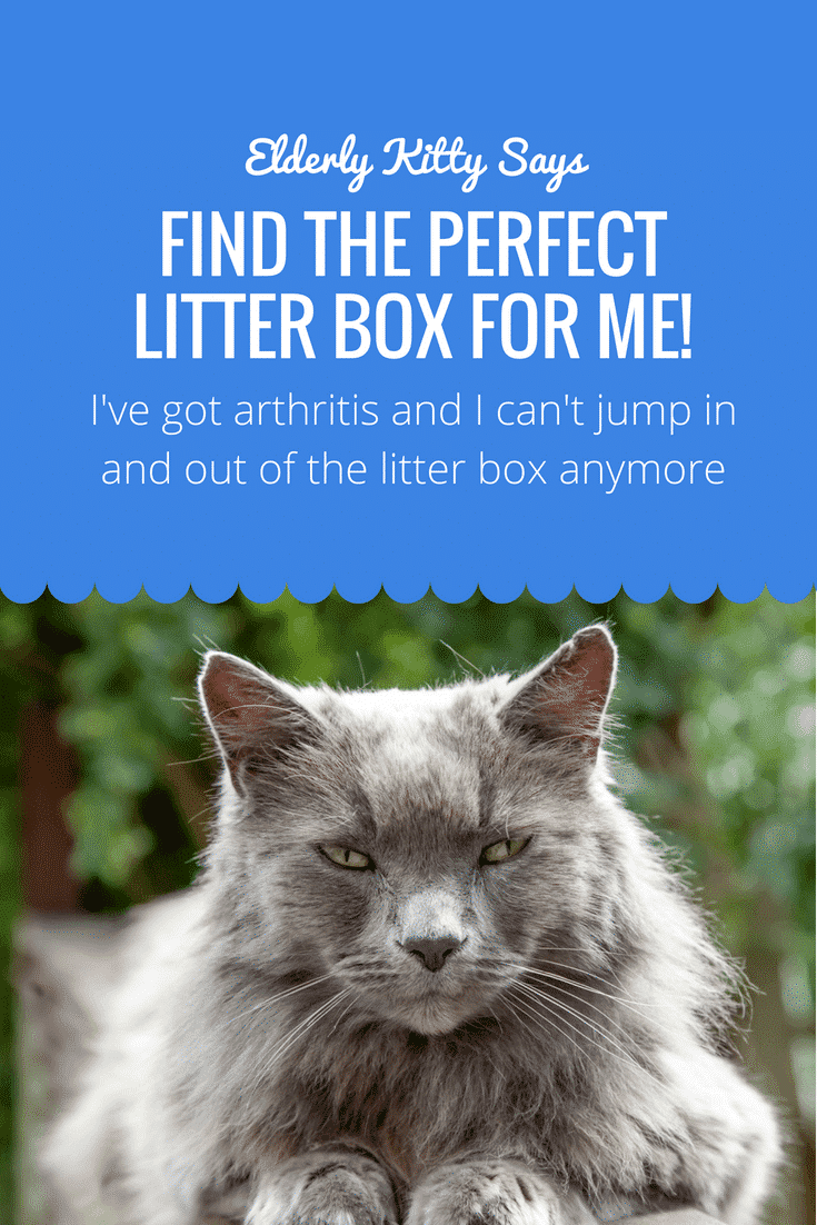 Litter Box for elderly kitty
