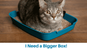 Uncovered Litter Box