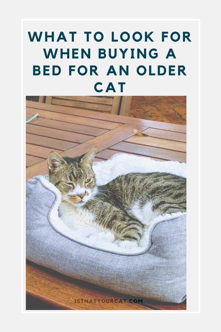 A bed for a senior cat