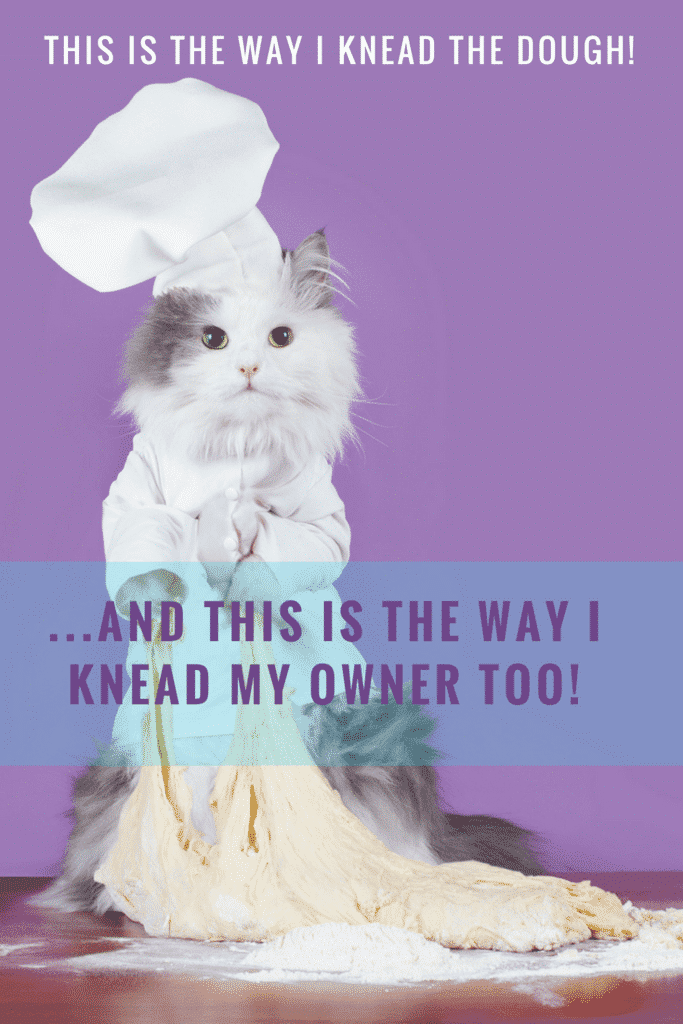 Why does my cat knead me but not my husband