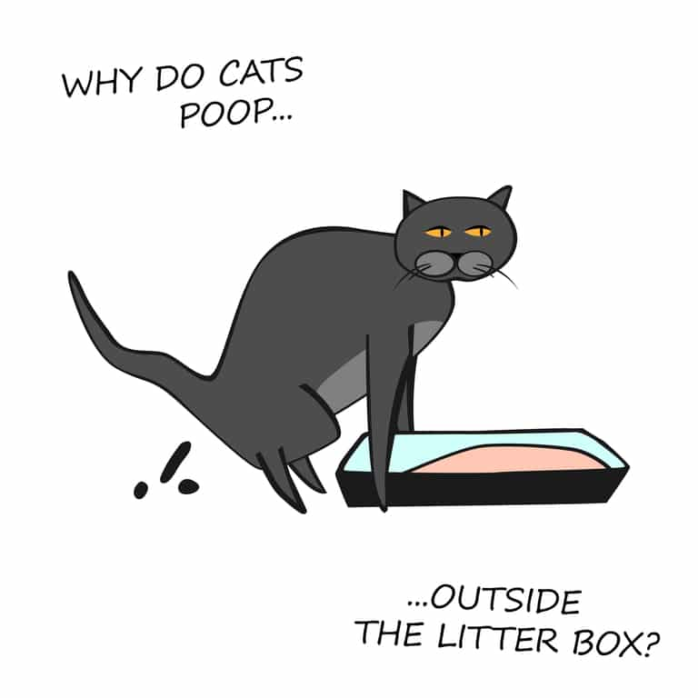 Cat pooping randomly but not in the litter box