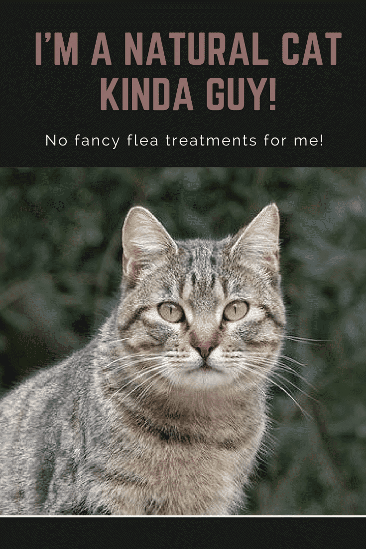 natural methods of flea control for cats