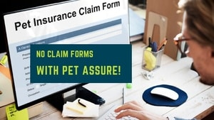 low cost cat insurance