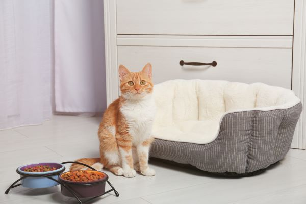 cat bed for senior cats