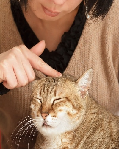 cat being petted on top of head