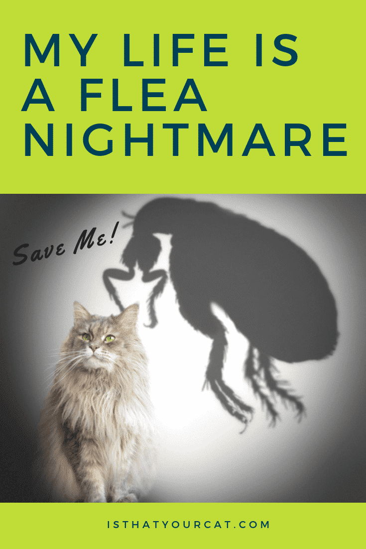 Cat escaping from a flea