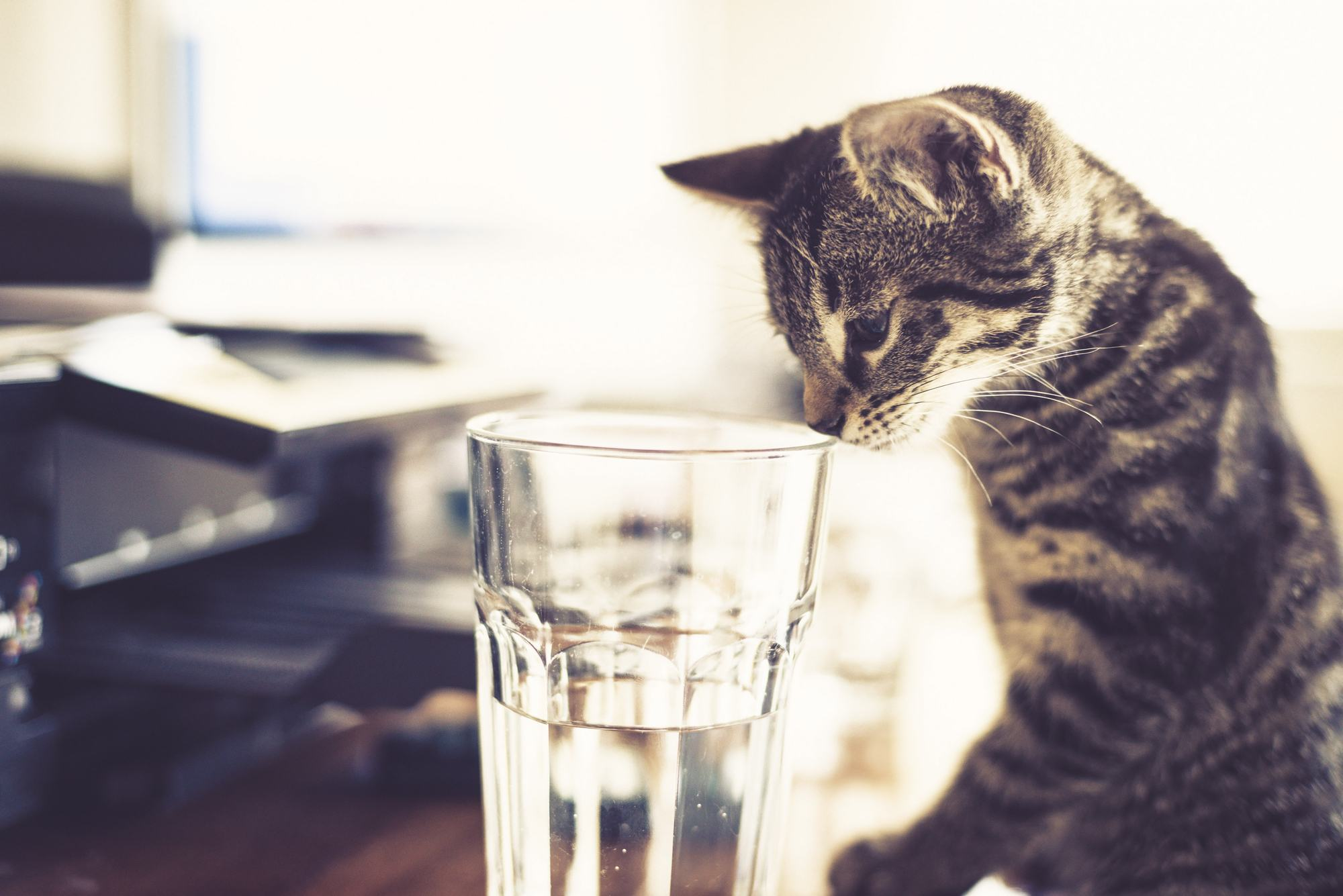 a cat with nose in a drinking glass