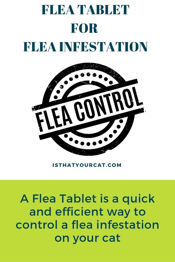 best flea tablet for cats