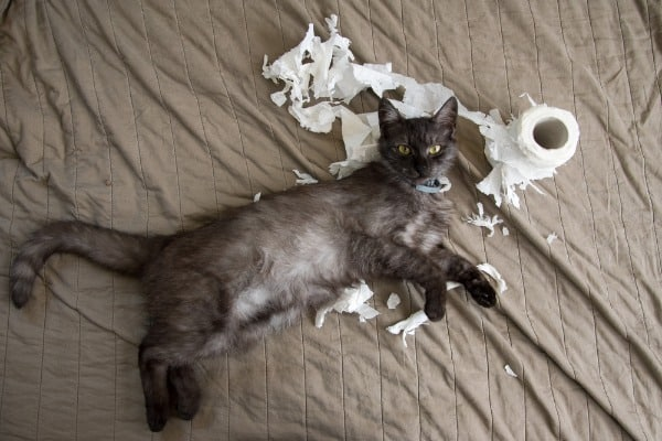 cat with shredded toilet paper