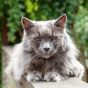 best litter boxes for older cats
