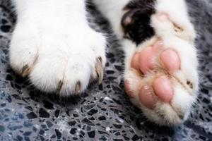 a cats paw and claws that have not been declawed