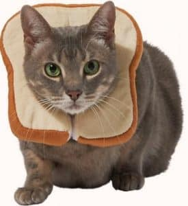 bread costume for cats
