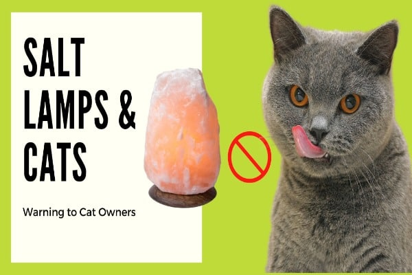 salt lamps and cats