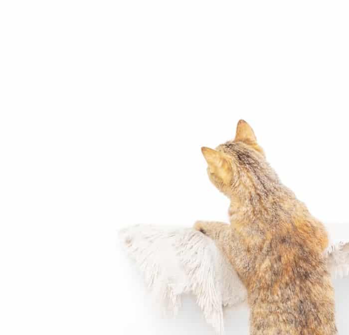 cat staring at a wall