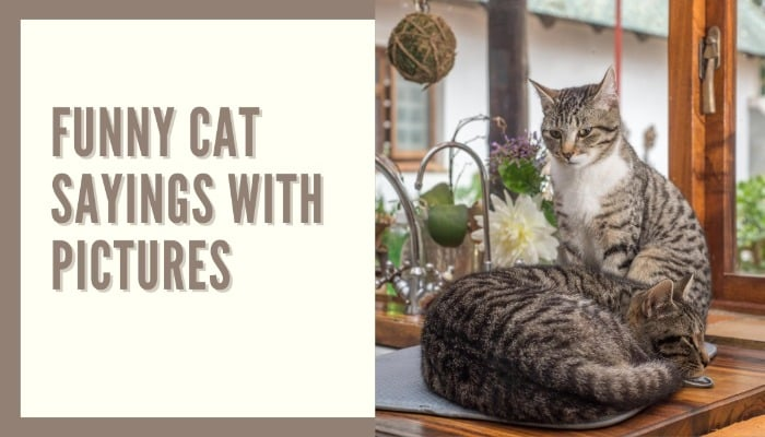 funny cat sayings with pictures