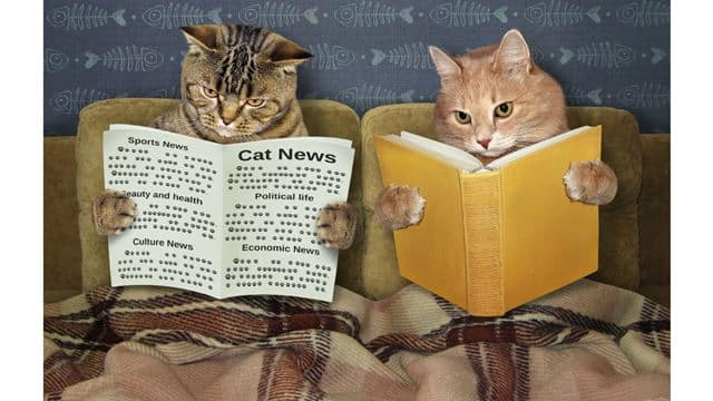 cats reading the paper in bed