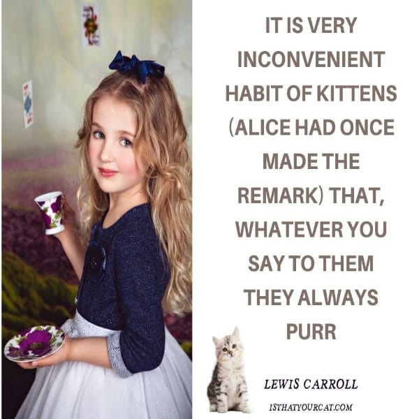 a quote about a cat and photo of little girl
