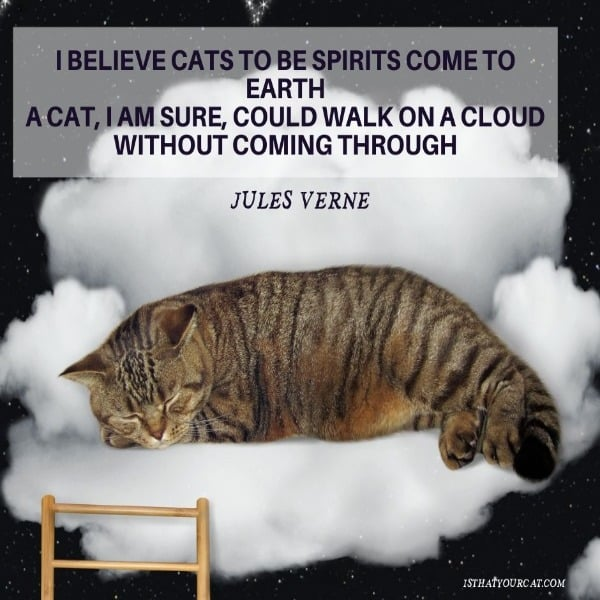 cat quote from Jules Verne, picture of a cat on a cloud