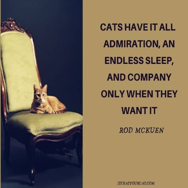 clever saying about a cat and a picture of a cat