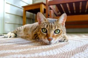 are litter box liners a good idea