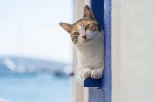 cat keeping cool leaning out a window