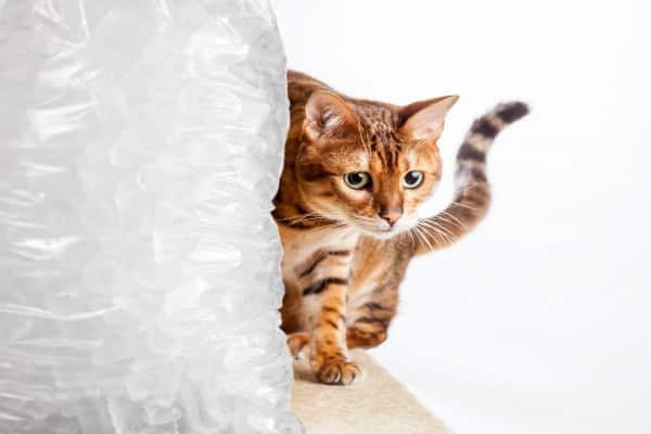 a kitten walking next to a very large bag of ice