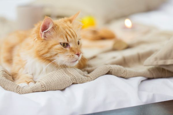 what to do if your cat pees on the your bed