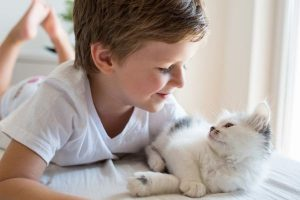 boy playing with a kitten