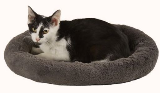 bed with low sides for older cat